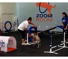 Zoom room dog training austin.aspx Plan